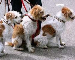 Mit Hunden flirtet es sich meist etwas leichter