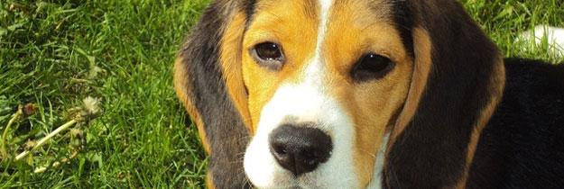 Ein Hund als Flirthelfer? So klappt es!