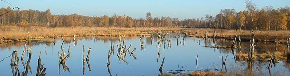 Das Naturschutzgebiet Wittmoor in der Nähe von Norderstedt